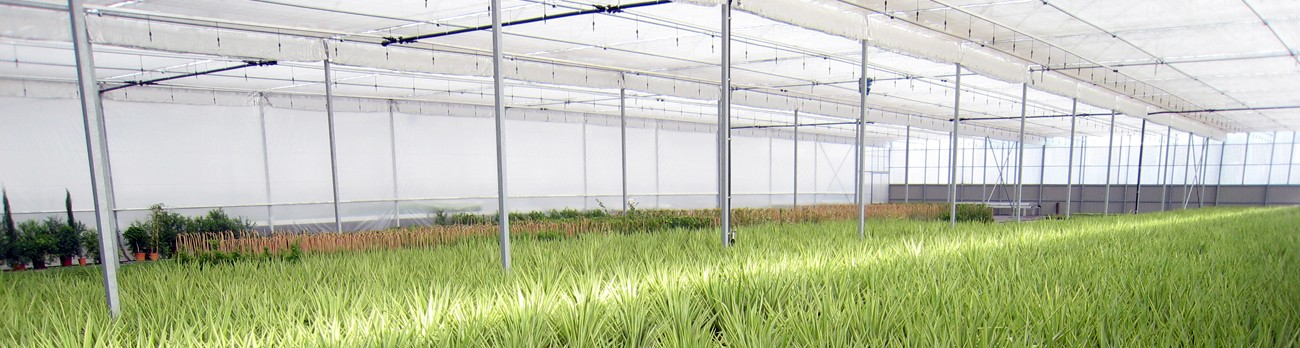 nave-de-planta-yucca-yewell